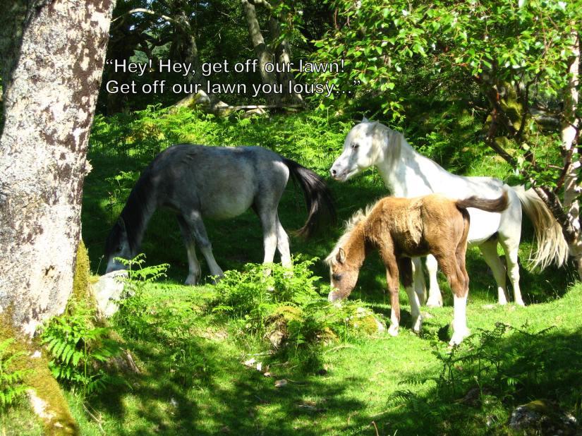 pesky horses